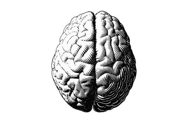 creatine on the brain - infographic
